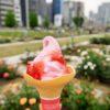 中之島バラ園で咲き誇るバラを見ながらローズソフトクリームを!