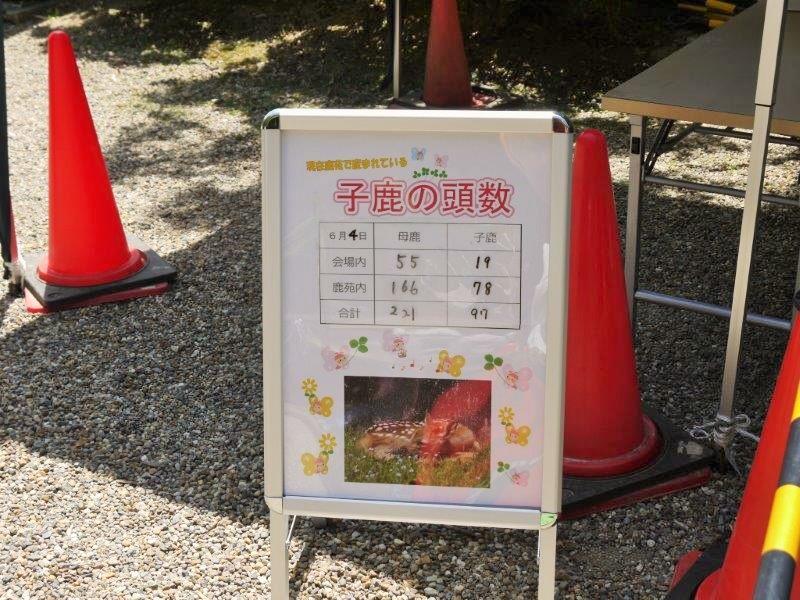 奈良公園小鹿