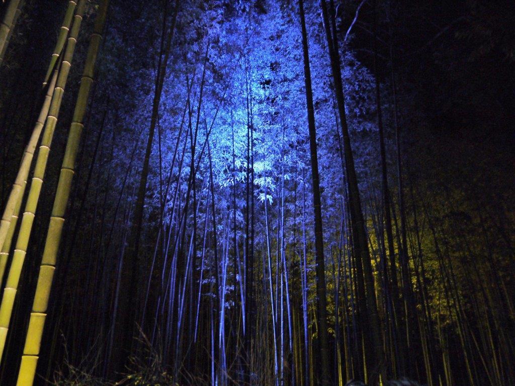 嵐山ライトアップ