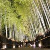 【京都】冬の嵐山は幻想的な竹林&法輪寺のライトアップ花灯路
