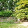 【滋賀】クマ出没注意!? 小谷城跡は哀愁漂う戦国屈指の山城