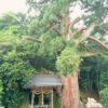 【滋賀】姉川の戦いで家康が本陣を敷いた岡山でヒャッとした話