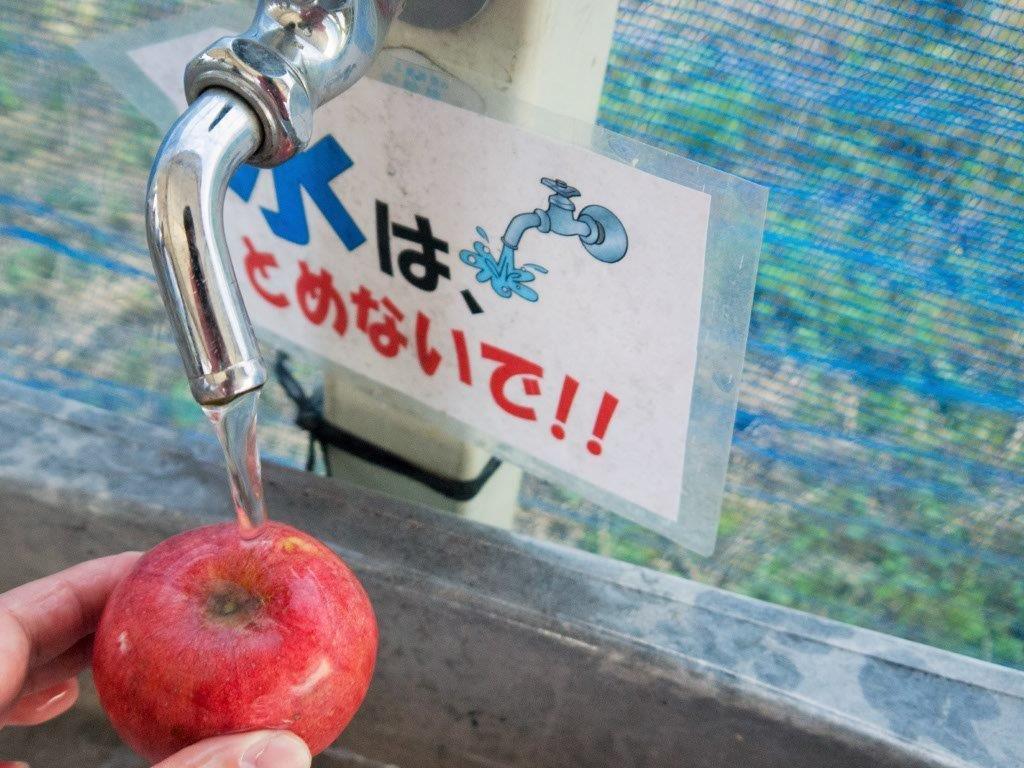 マキノピックランドでリンゴ狩り