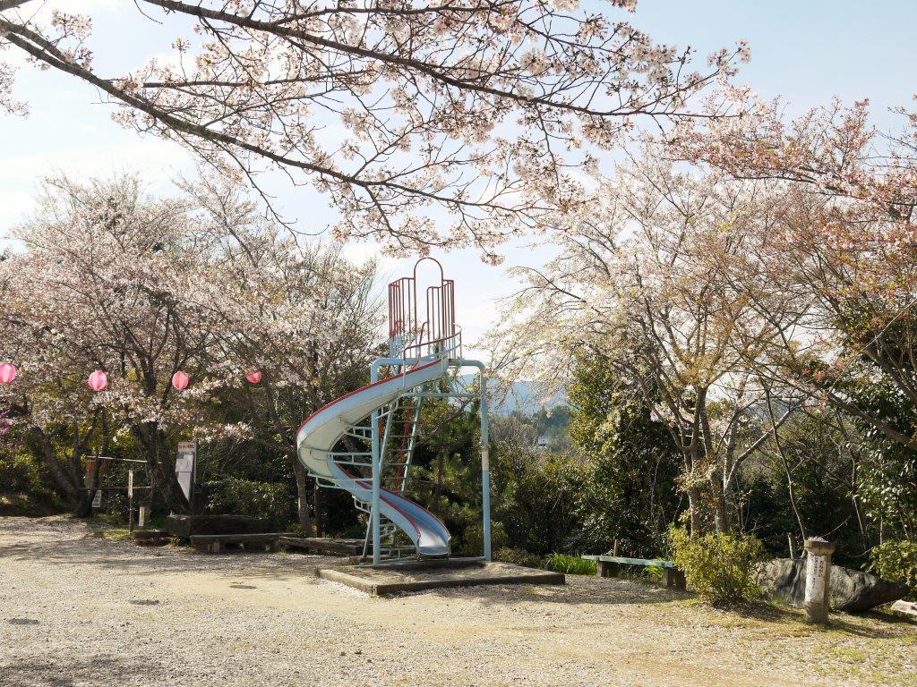丸高稲荷神社、桜