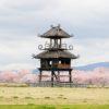 【奈良】桜満開の唐子遺跡がおすすめ!桜吹雪でピンクに染まる唐子池