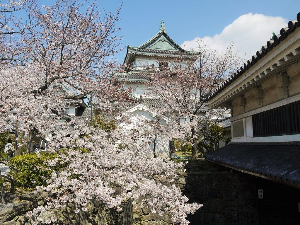 和歌山城、桜