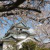 和歌山城で桜満開!意外と穴場な駐車場&大手門から天守閣まで歩く
