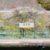 【大阪】桜の名所の山中渓駅でサクラ散策!大阪で唯一のJR無人駅