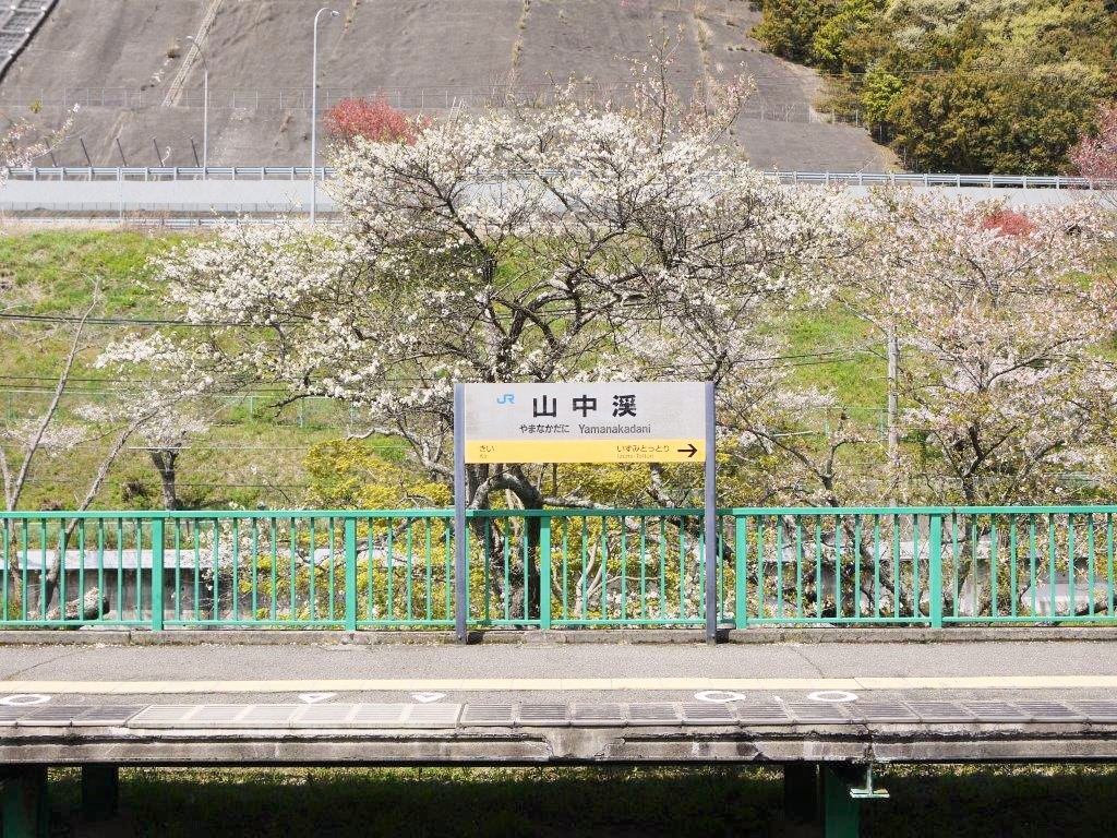 山中渓駅、桜