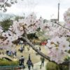 【大阪】五月山公園で桜満開!子連れで花見ならココが絶対におすすめ