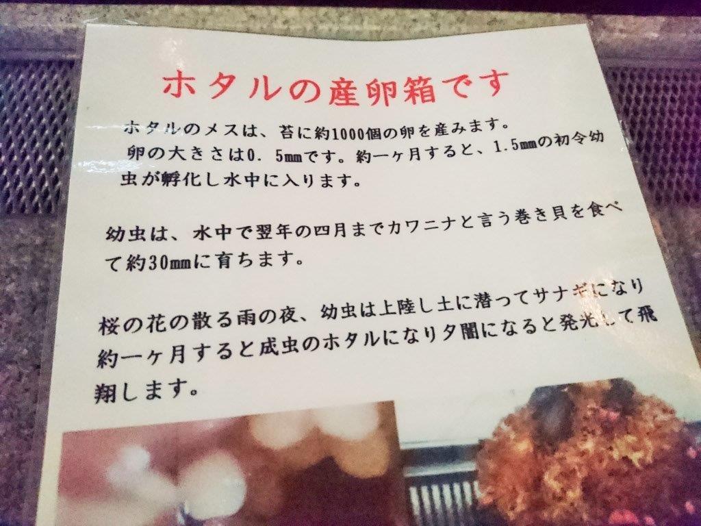 新梅田シティ内「中自然の森」蛍放流