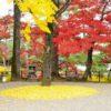 【京都】明智光秀ゆかりの亀山城跡!イチョウ並木に光秀を偲ぶ