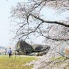 【奈良】石舞台古墳で桜が満開!ここは花見の穴場&子連れにおすすめ